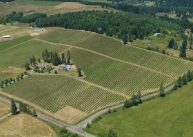 1-web-high-pass-rd-junction-city-vineyards-for-sale-lane-county-the-kelly-group-real-estate