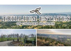 trillium-stealth-website-featured-image